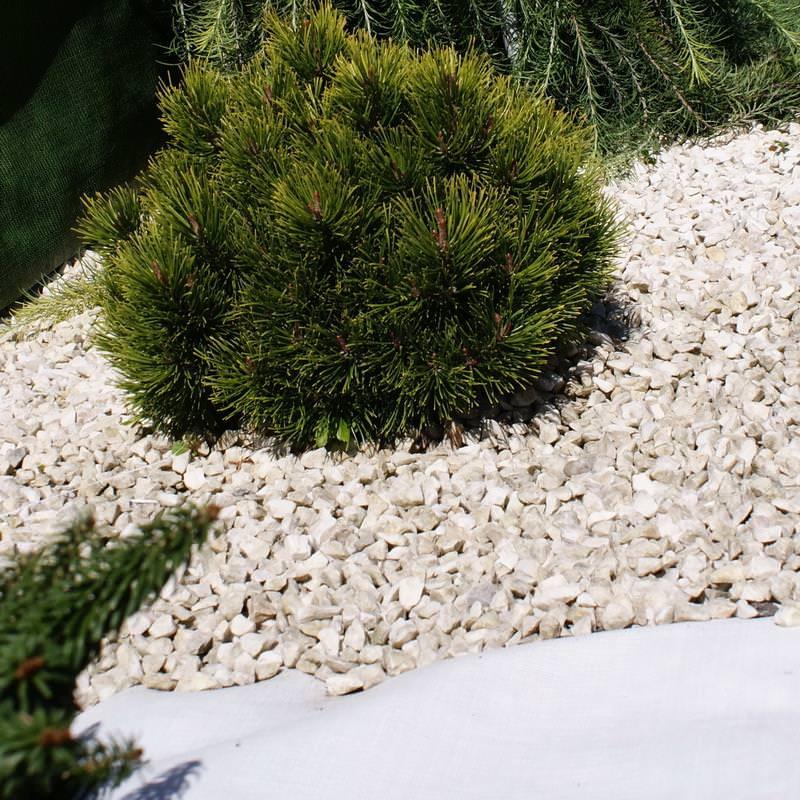 Diese weiße Unkrautfolie schützt Ihre Pflanzen